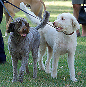Westminster Dog of the Year 2016 <br /> in Victoria Tower Gardens, London, Great Britain <br /> 8th September 2016 <br /> organised by The Kennel Club and Dogs Trust together with dog loving MPs and Peers. <br /> <br /> Winners:<br /> <br /> 1st - Jonathan Reynolds MP with his dogs Clinton and Kennedy <br /> <br /> <br /> <br /> <br /> Photograph by Elliott Franks <br /> Image licensed to Elliott Franks Photography Services