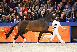 535 - Goliath<br /> KWPN Stallion Selection - 's Hertogenbosch 2014<br /> © Dirk Caremans