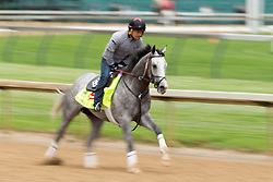 Derby 142 hopeful Cherry Wine with Faustino Aguilar up were on the track for training, Tuesday, May 03, 2016 at Churchill Downs in Louisville.