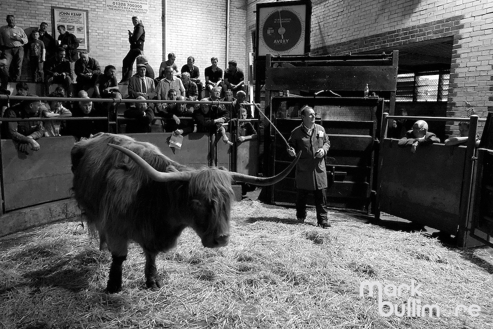 Norwich Livestock Market. <br /> <br /> Picture: MARK BULLIMORE