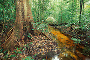 rain forest; rainforest; forest, stream, black water; water; tropical; tropical forest