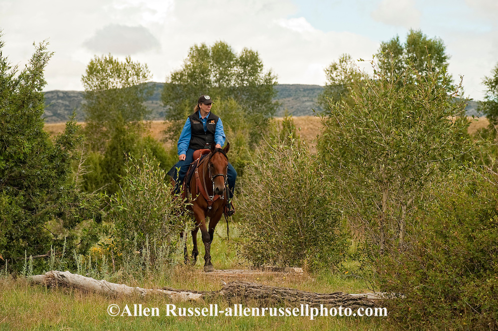 Trail Riding, Quarter Horse, Montana