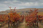 Kiana Vineyard, Red Mountain AVA, Washington