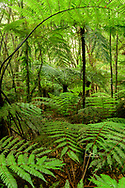 Oceania; New Zealand; Aotearoa; North Island; Kawerau; Tarawera Forest
