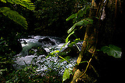 OCHO RIOS, ST. ANN : February 14, 2007 -- JAMAICA: DAY 1: OCHO RIOS --   River in botanical gardens near Ocho Rios, Jamaica February 14....Steve McKinley Photo.