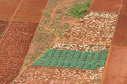 Red Onion field and red soil - the Jaffna Peninsula.