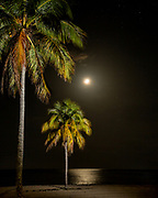 Moonlight and illuminated coconut palms along the beach of the Isle of Youth, Cuba