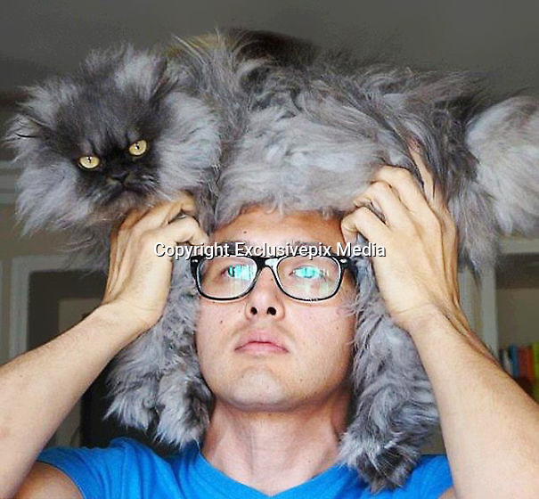 People Wearing Cats As Hats is the new Trend<br /> <br /> Most animal lovers hate the idea of wearing fur because of the needless death and suffering it causes, but there's a perfect compromise if you want to look absolutely fabulous without hurting anything &ndash; just wear a lazy live cat! Given how popular this latest trend is, there are plenty of cats out there that are perfectly content napping on their owners' heads and keeping them warm and stylin'. Just make sure they're comfortable!<br /> &copy;Exclusivepix Media