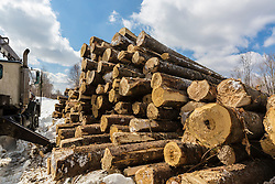 Recently harvested timber in a log yard at Big Six Township, Maine.