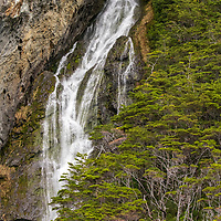 A waterfall on a cliffside covered in Southern Beech (Nothofagus species) trees on Garibaldi Fjord inside of Alberto de Agostini National Park in Chile's Tierra del Fuego region.