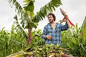 2018 Banana Source Hawai'i