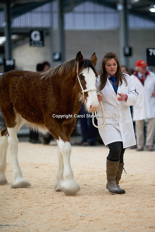 I Johnston's Roughlands Royale  b 01/05/2015<br />