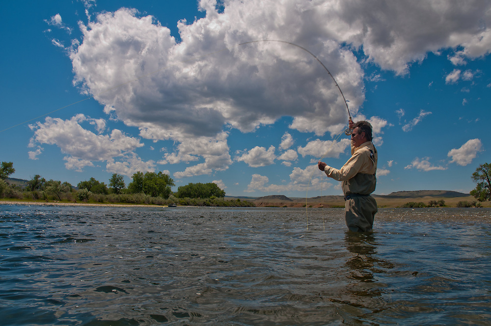 Fly fisherman set the hook on a trout while fishing the Bighorn River in Montana.