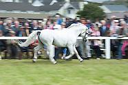 Connemara pony show 2014