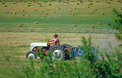 Farmer on Tractor Hay Field Agriculture
