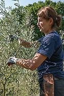 Mia (pruning) pruning an Olea europaea (olive) at RBG Kew