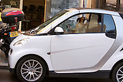 A boxer driving (?) a Smart.