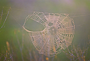 Spider web and dew at sunrise - Mississippi
