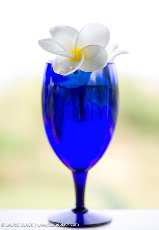 Blue tropical drink with white flower
