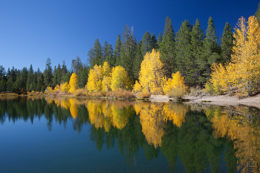 """Coldstream Pond in Autumn 1"" - Photograph of yellow cottonwood trees and pine trees along the shore of Coldstream Pond in Truckee, California."