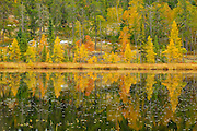 LArches reflected in Lily Pond<br /> Whiteshell Provincial Park<br /> Manitoba<br /> Canada