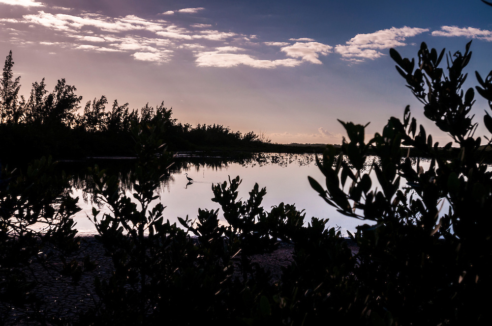 Sunrise in a mangrove creek, Eleuthera, Bahamas