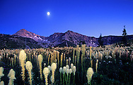 Bear grass and moon over Kiyo Crag in the Badger Two Medicine Roadless Area. Lewis and Clark National Forest, Rocky Mountain Front, Montana