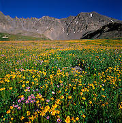 Wildflowers & Creek. Mayflower Gulch & Ten Mile Mountain Range, Summit County, Colorado
