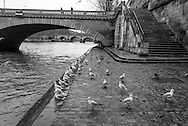 France. Paris.4th district.the Seine river . Bourbon quay on Saint louis island ,  / la pointe de l ile Saint Louis,