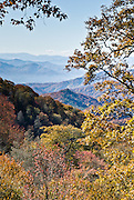 At Webb Overlook (4775 feet elevation) on Newfound Gap Road in Great Smoky Mountains National Park (on the North Carolina side), gaze at fall leaf colors in the Blue Ridge Mountains, which are part of the Appalachian Mountains.
