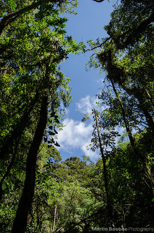 "A ""light gap"" caused by a fallen tree in the Monteverde Cloud Forest Biological Reserve, Monteverde, Costa Rica. Light gaps lead to colonization of new plant species in rainforests."