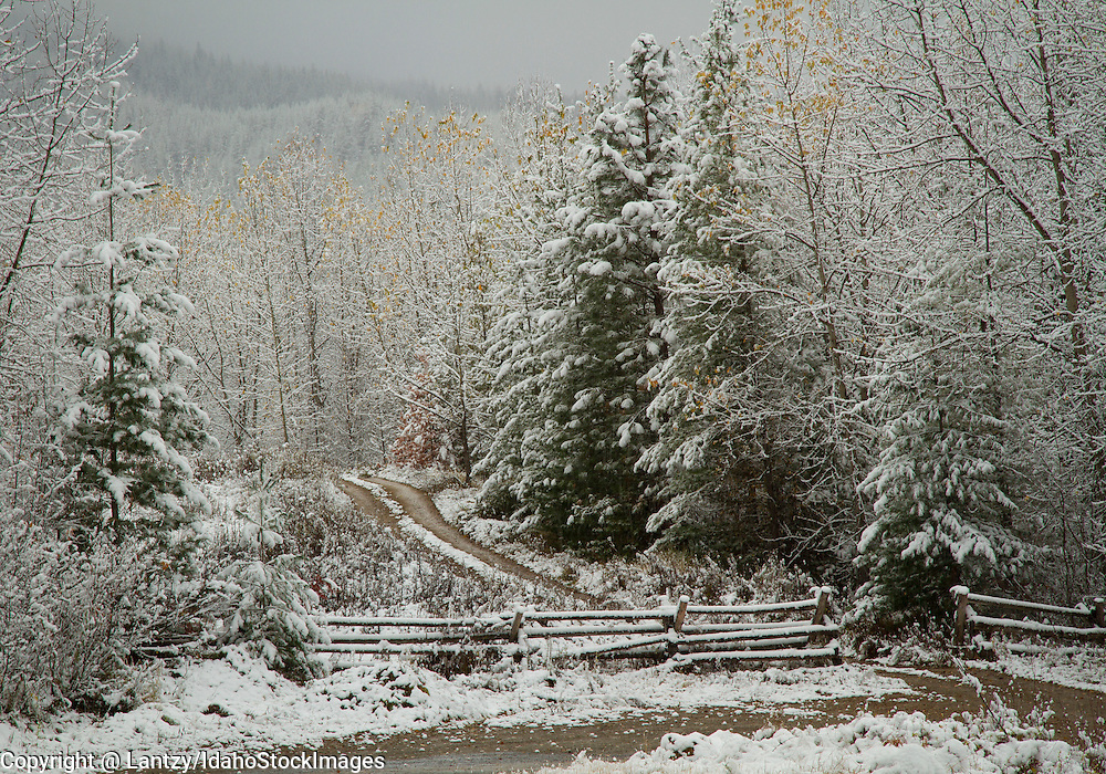 Idaho, North, Wallace, A road in the St. Joe District of the Idaho Panhandle National Forest in winter.