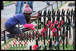A volunteer  from The Royal British Legion places the wooden crosses into the Field of Remembrance at Westminster Abbey in London, Tuesday 6th November 2012. The officially opening will be performed  by the Duke of Edinburgh  on Thursday  8th November 2012. Photo by: Stephen Lock / i-Images