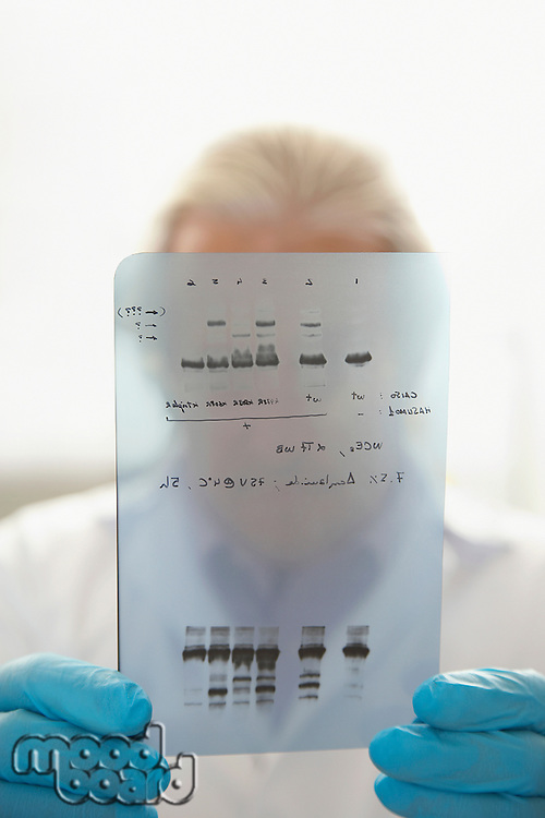 Scientist looking at DNA test results indoors focus on results