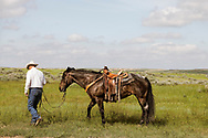 Rancher, Joe Peila, after long day of branding cattle, for neighbor and friend John L. Moore, Lazy TL Ranch, north of Miles City, Montana