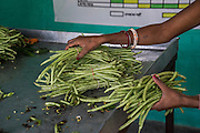 Long beans collected from producer group farmers are packed in the collection centre in Machahi village, Muzaffarpur, Bihar, India on October 27th, 2016. Non-profit organisation Technoserve works with women vegetable farmers in Muzaffarpur, providing technical support in forward linkage, streamlining their business models and linking them directly to an international market through Electronic Trading Platforms. Photograph by Suzanne Lee for Technoserve