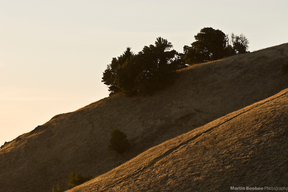 Sunset light on hillsides, Mount Tamalpais State Park, California