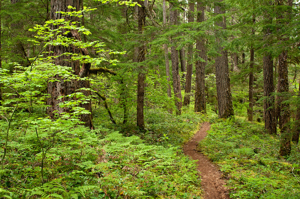 McKenzie River National Recreation Trail, south of Trailbridge Reservoir; Willamette National Forest, Cascade Mountains, Oregon.