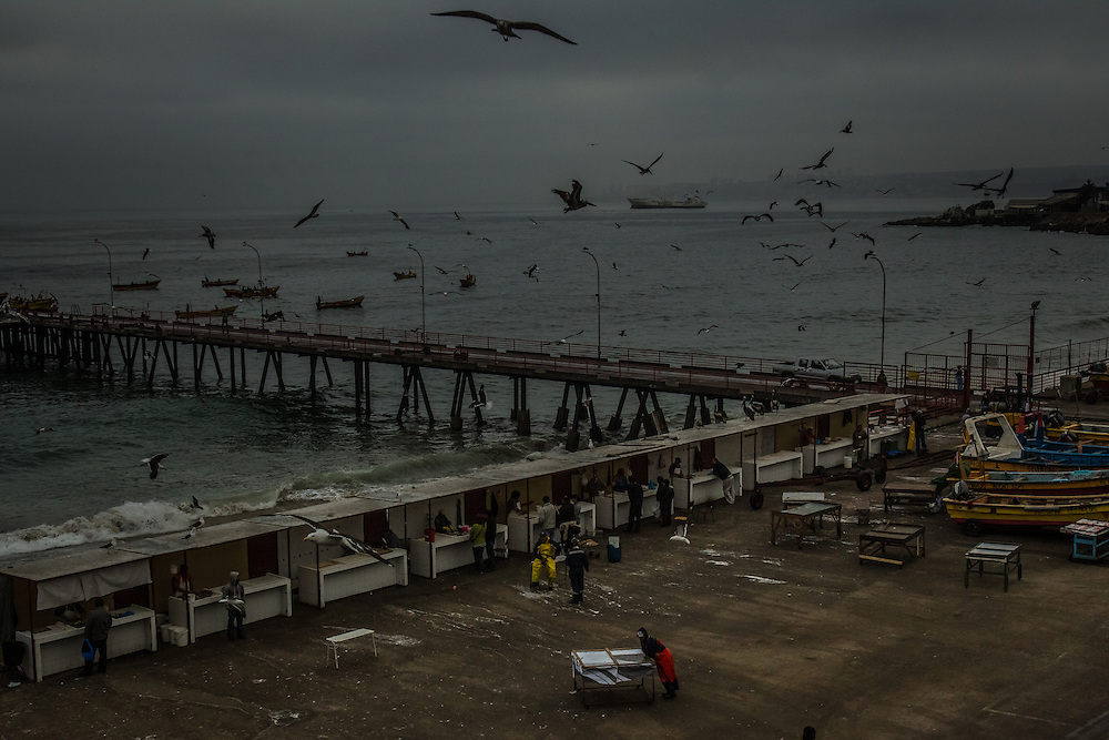 VALPARAISO, CHILE - MARCH 17, 2014: Birds fly over the port in Valparaiso, Chile. Artisanal fishing boats are lowered off of this pier into the water by a crane. PHOTO: Meridith Kohut for The World Wildlife Fund
