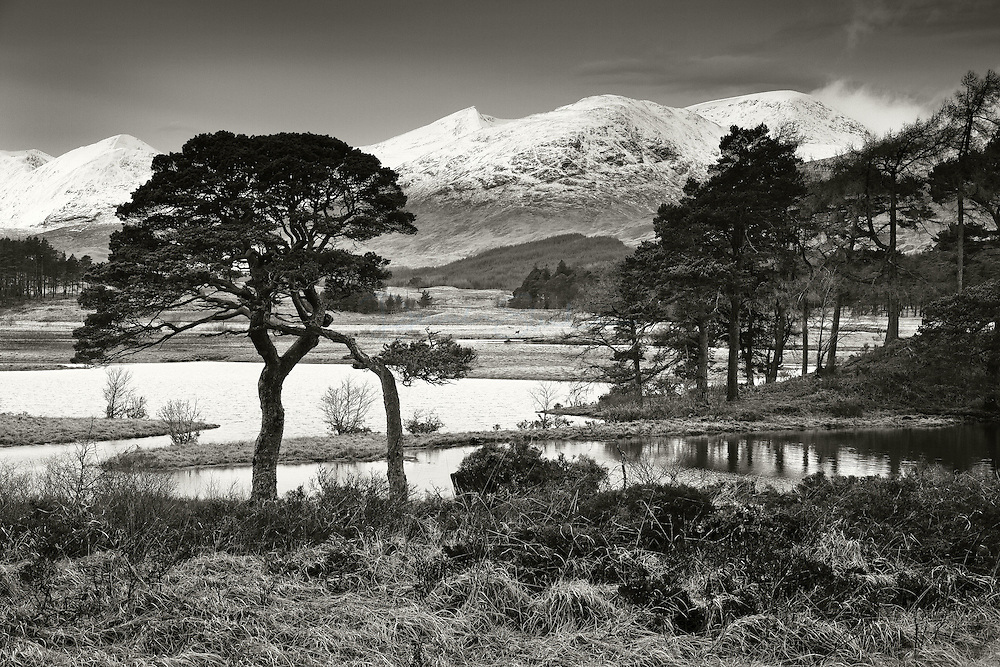 Scots pine, Loch Tulla and Black mount