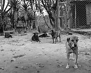 The shelter, a large ranch in the Guatemalan highlands, normally houses at least 300 dogs.