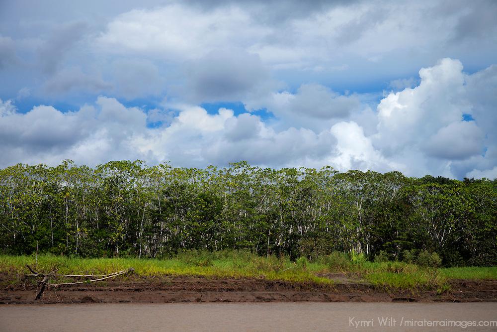 South America, Peru, Amazon. Amazon trees and cloudy skies.
