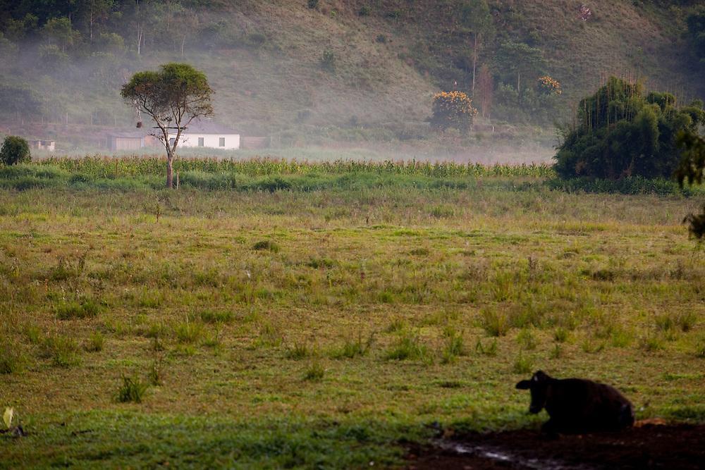 Pedra Bonita_MG, Brasil...Gado em uma paisagem rural em Pedra Bonita...A cattle in the rural landscape in Pedra Bonita...Foto: LEO DRUMOND / NITRO