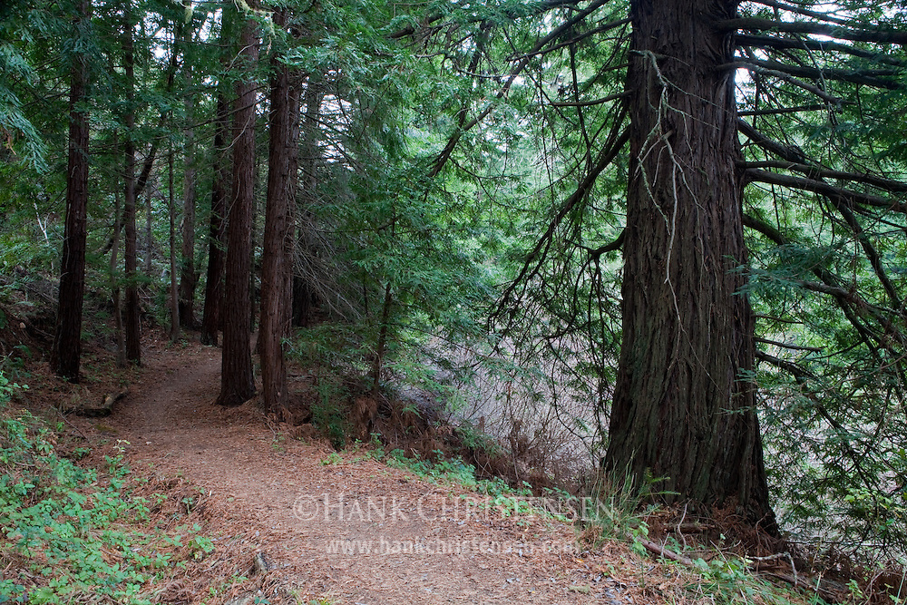 A trail winds through dense redwoods, Purisima Creek Redwoods Open Space Preserve