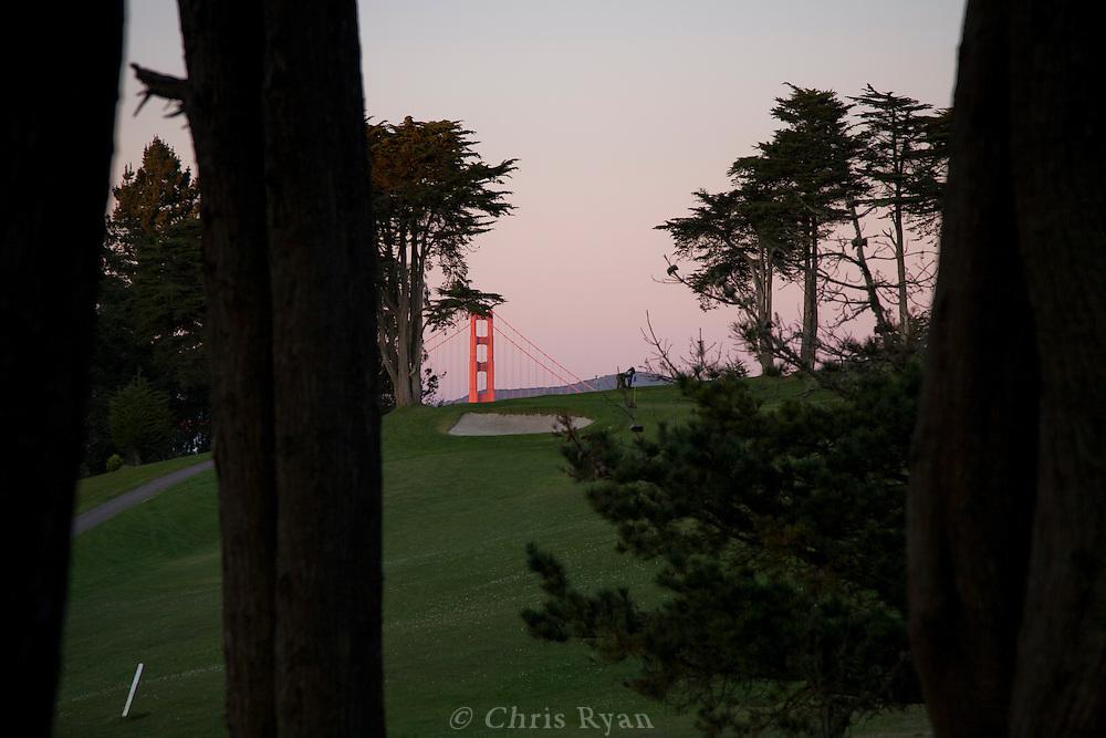 Tower of Golden Gate Bridge at sunset peeking through cypress trees on golf course, Lands End, San Francisco, California