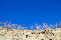 View of desert plants on riverbank cliff against blue sky Andy McGuire Hanford Reach Columbia River Southeast Washington USA.