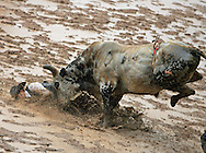 Bull Rider Colt Orchard gets pushed into the mud by F82 Amanda Meyer, Orchard earned a score of 82 on the ride, 28 July 2007, Cheyenne Frontier Days