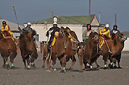 Mongolia. Camel polo. during camel festival. Gobi desert.. in Winter for Tsagan sar , the mongol new year  Bulgan -