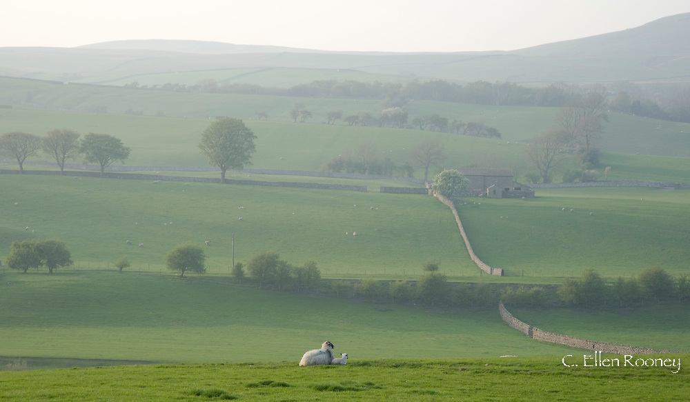 Early morning mist over stone barns and walls in fields outside Bainbridge, Wensleydale in The Yorkshire Dales National Park, England, UK