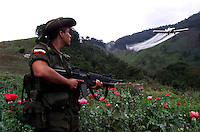 An anti-narcotics officer keeps guard as a plane fumigates heroin poppies in the mountains of Colombia. (Photo/Scott Dalton)